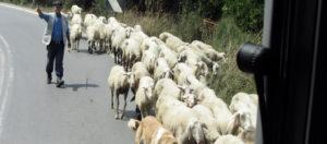Sheep Herder - Zeos Brewery - Our Neighborhood